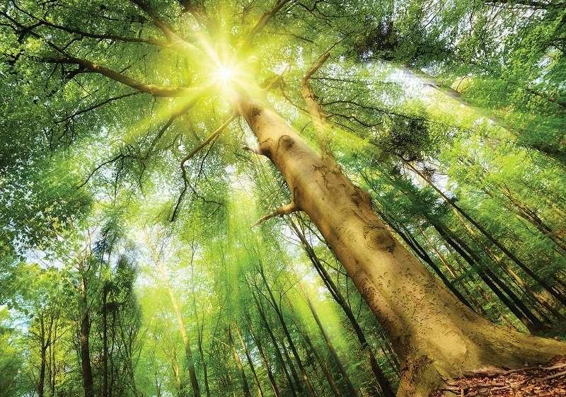 Green Tree - C02131