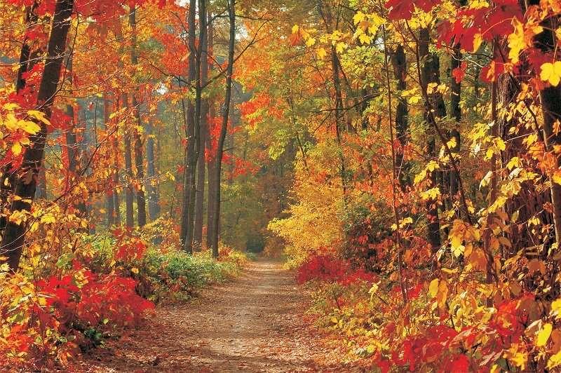 Fall - C02104