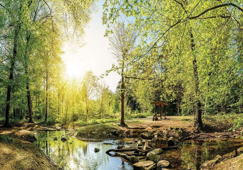 Forest in Spring- C02121