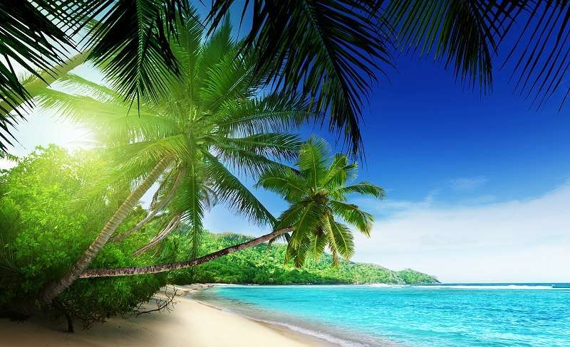 Palms and sun - C02195