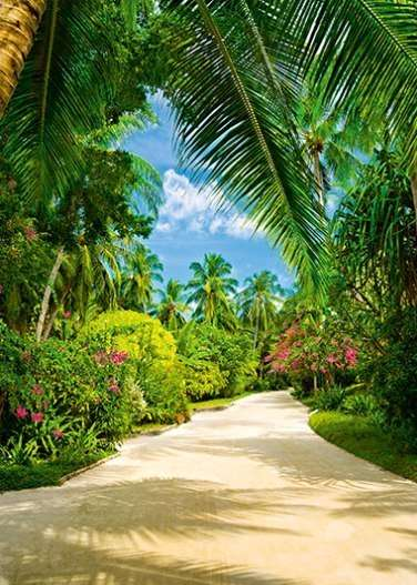 Tropical Pathway - 0411