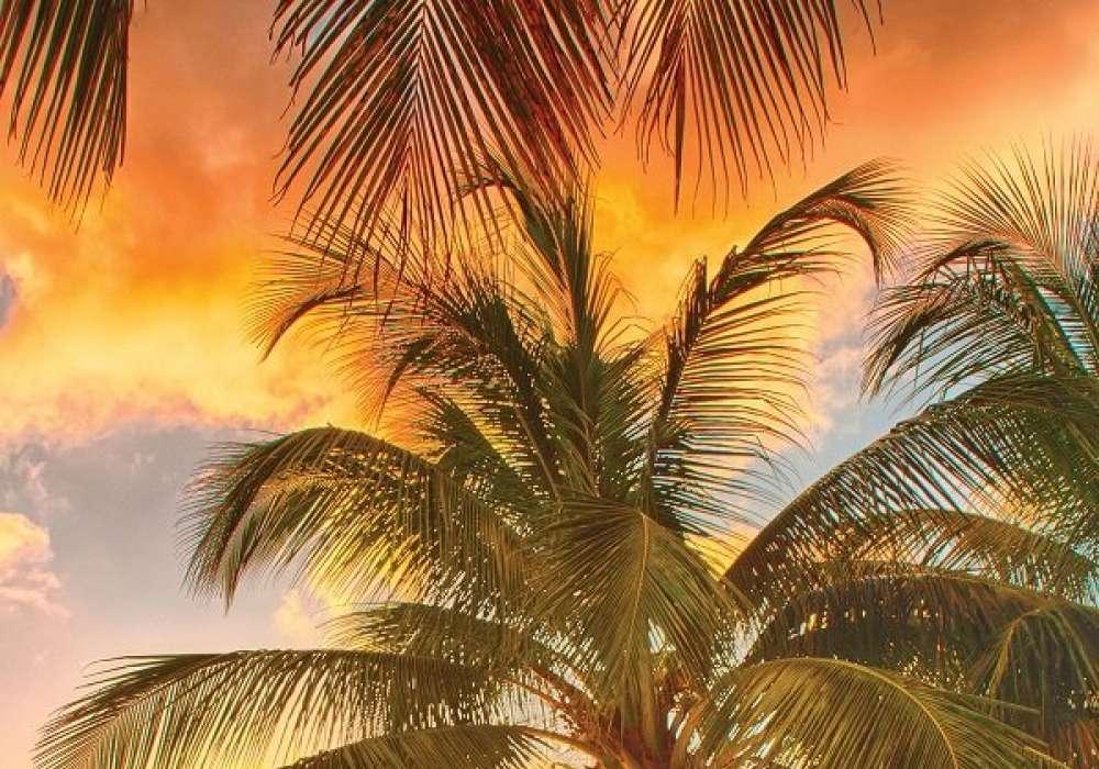 Palm - C02138