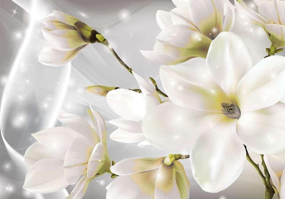 Magnolia - C02151