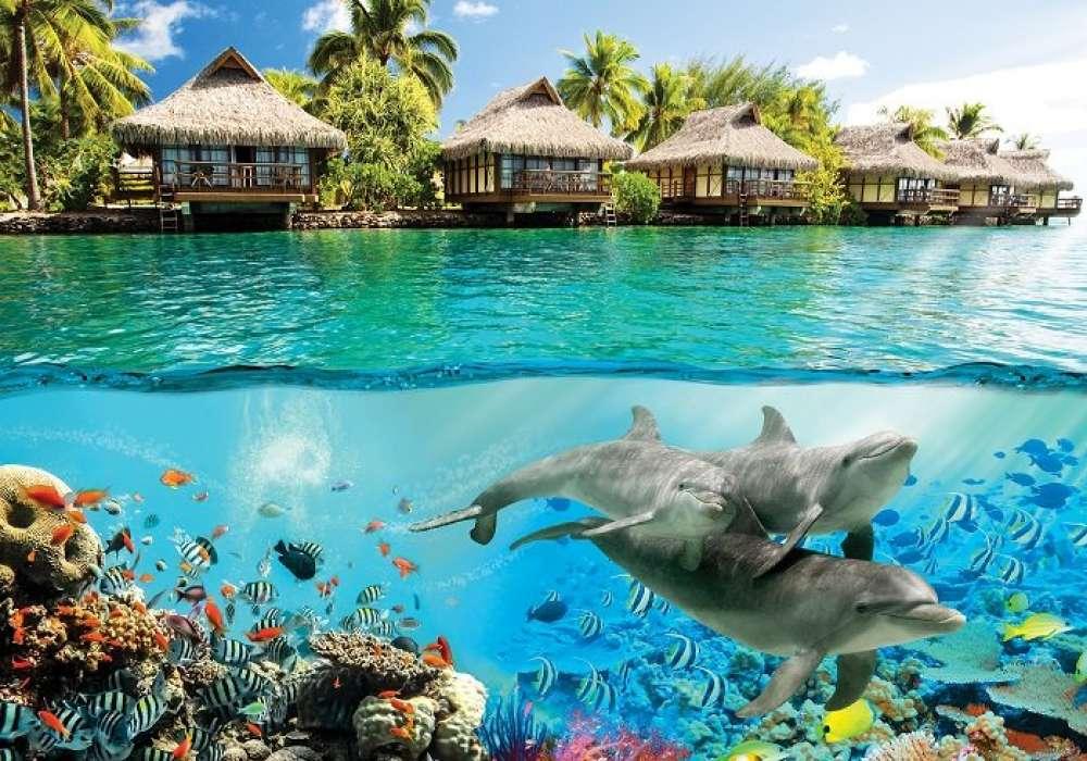 Hawaii Dolphins - C0286
