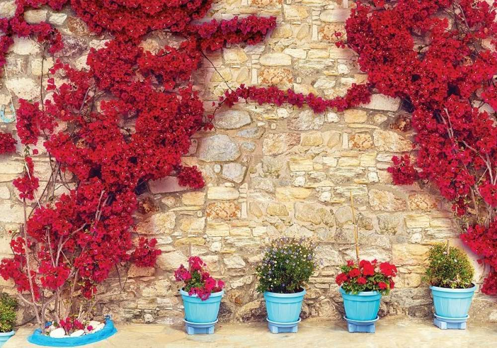 Red Flowers - C02146
