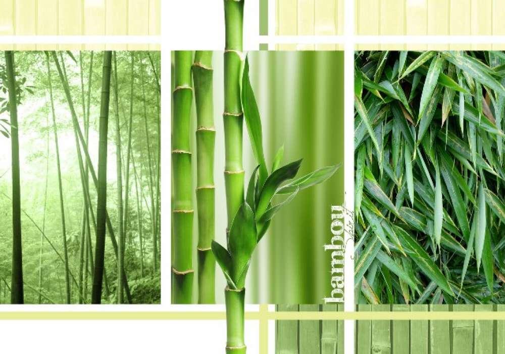 Bamboo - C0436