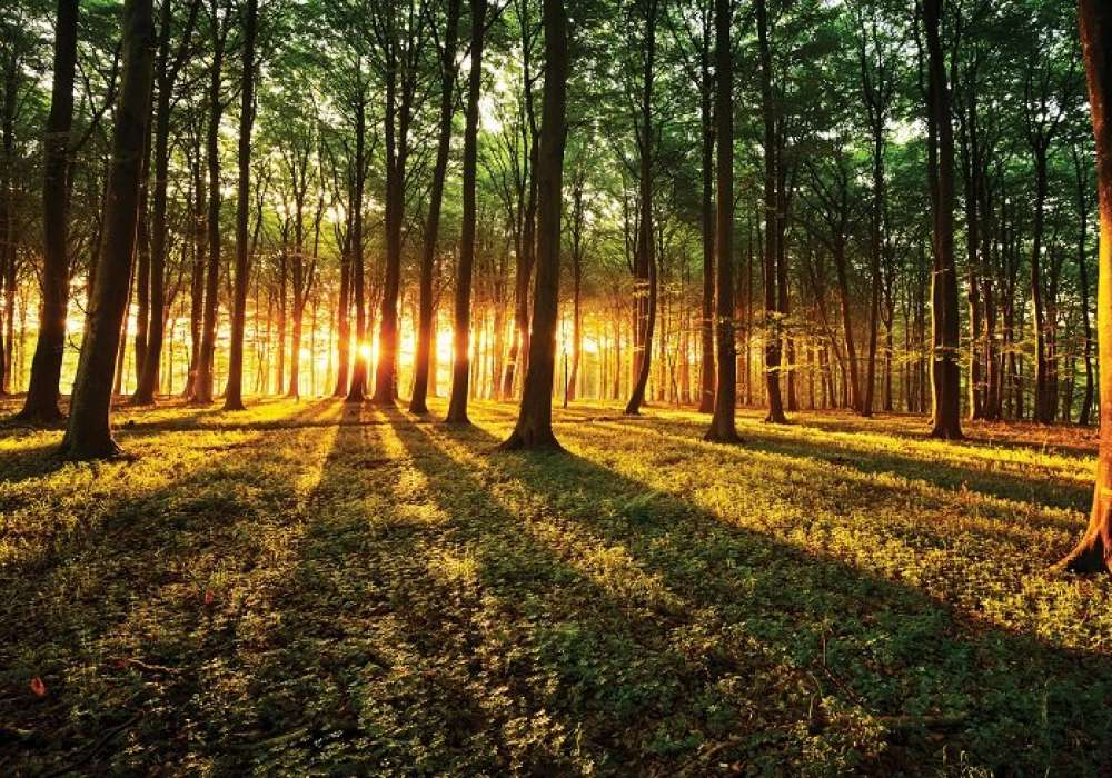 Sunset in Forest - C04113