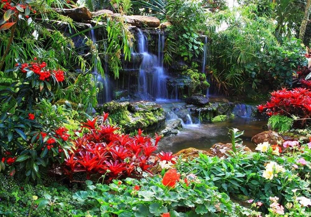 Colourful Garden - C402
