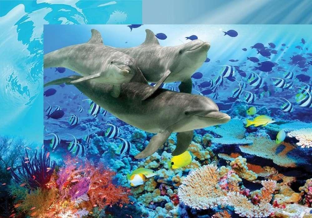 Dolphins - C04107