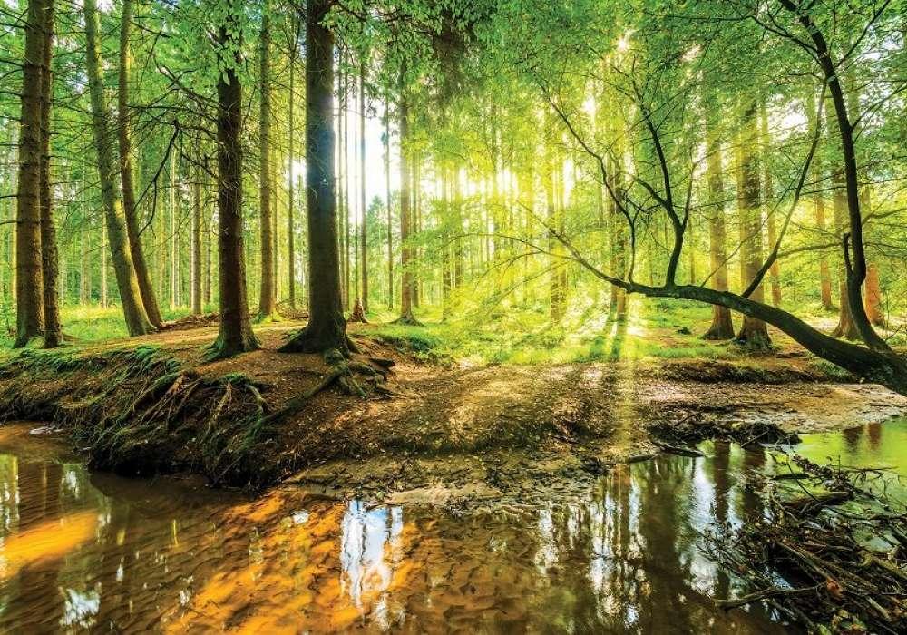 Sunrise in Forest - C04134