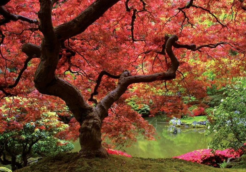Tree - C0431