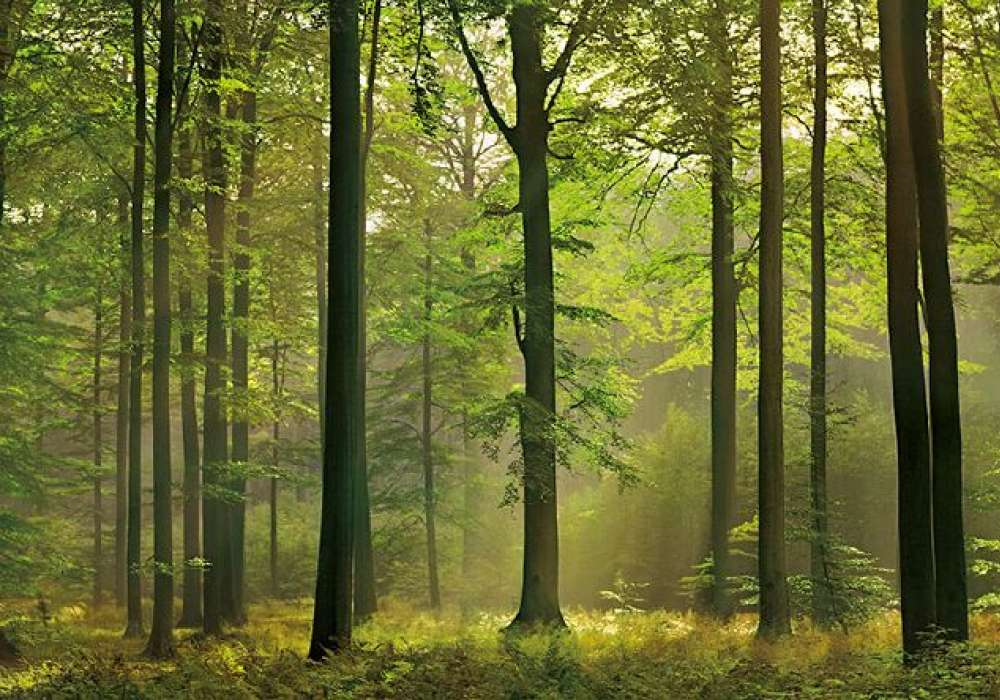 Green Forest - 0810