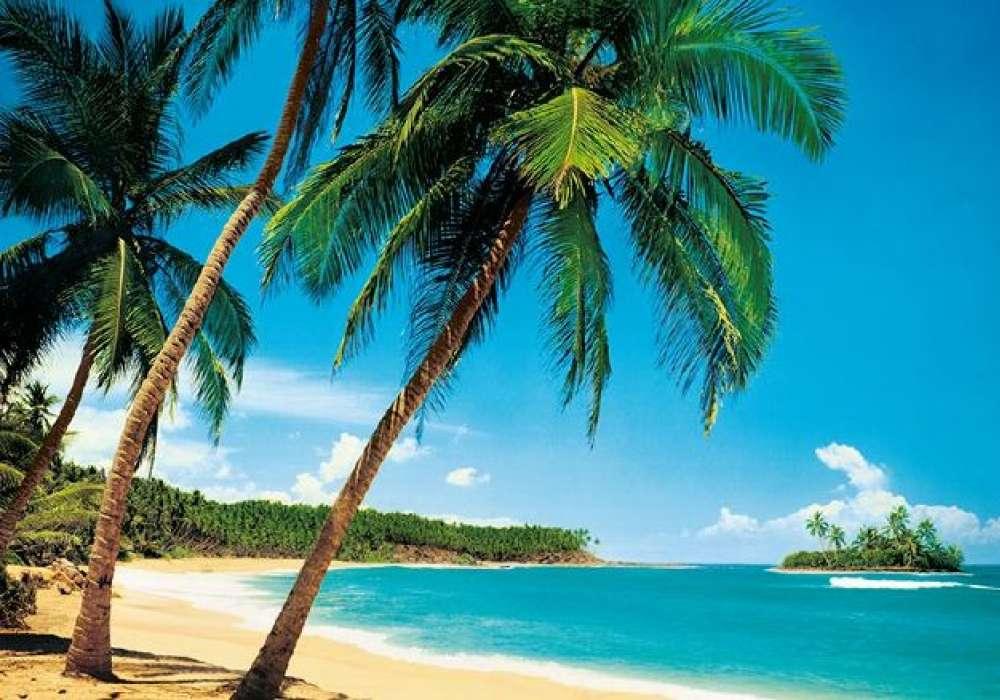 Tropical - 0825