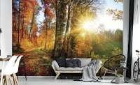 фототапет есен в гората 04253