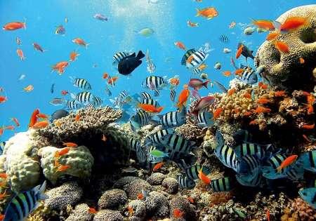 Underwater - C0254
