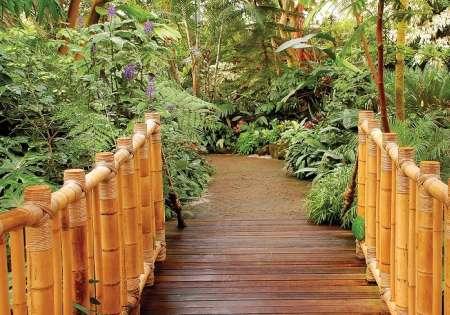 Pathway in Jungle - C0212