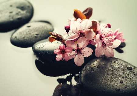 Stones and Flower - C02177
