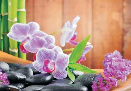 Orchid Zen Stones - C0494