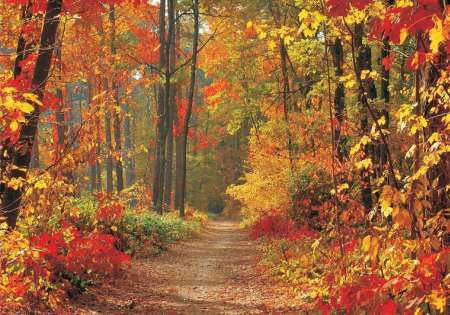 Forest in Fall - C826