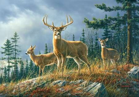WHITETAILS - 0847