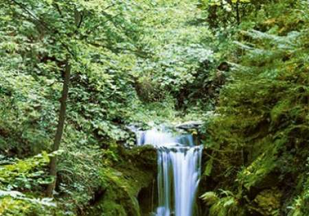 Waterfall in Spring - 0412
