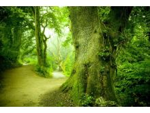 Green Forest - C0227
