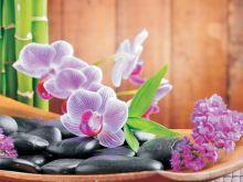 Ochrid and Zen Stones - C0230