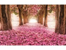 Pink Wood - C0220