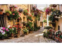 Flower alley - C0412