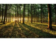 Sunny Forest - C0474
