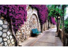 Romantic Alley - C0422