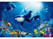 Underwaters Life - 0826