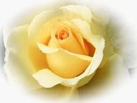 Фототапети с рози