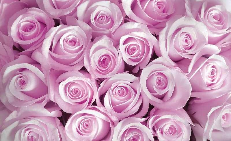 фототапет розова стена