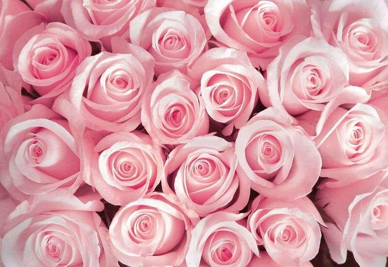 фототапет розови рози