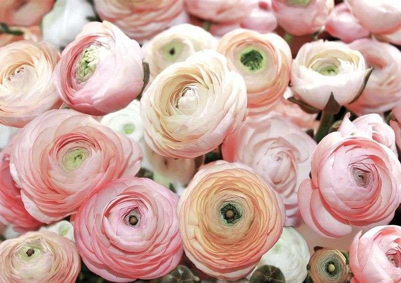 фототапет рози