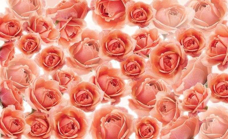 фототапет рози в червено