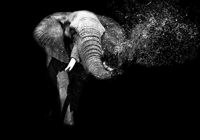 Фототапет с чено бяло слонче