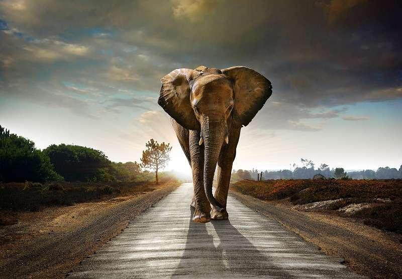 Фототапет със слон