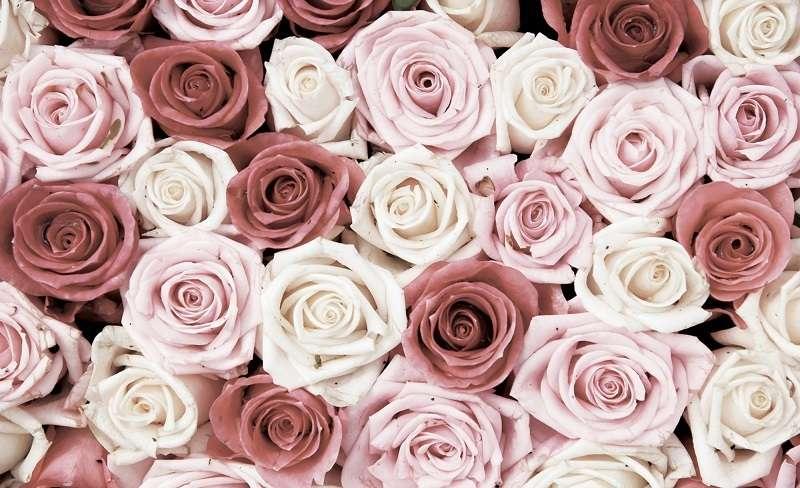 фототапети рози в червено и розово