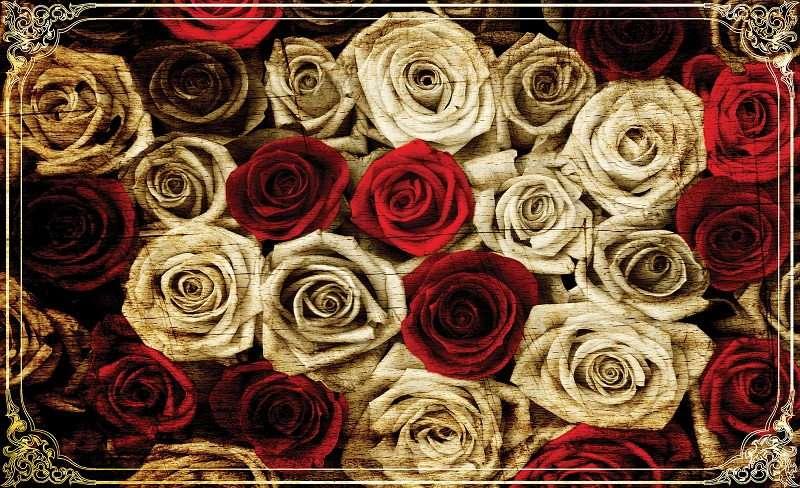 фототапет червени рози с бяло