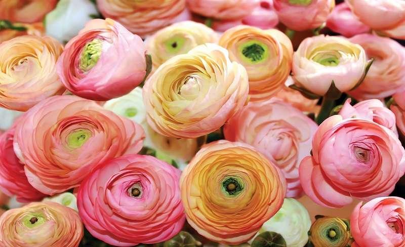 фототапет с рози