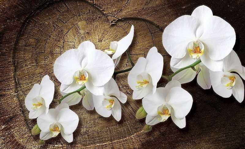 фототапет орхидея и дърво