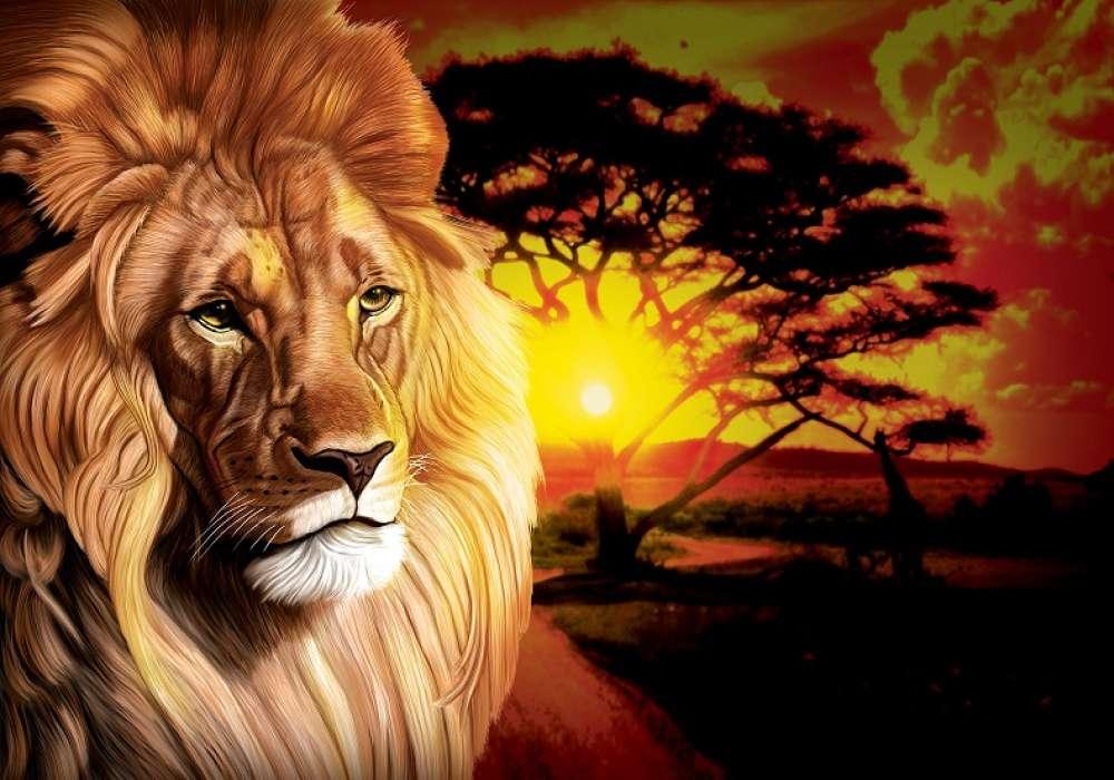 African Lion - C0263