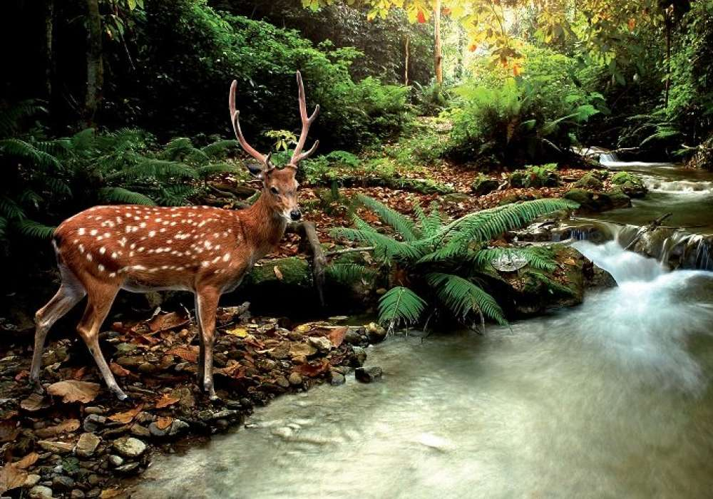 Deer by the river - C0246