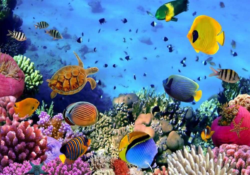 Sea Life - 1412