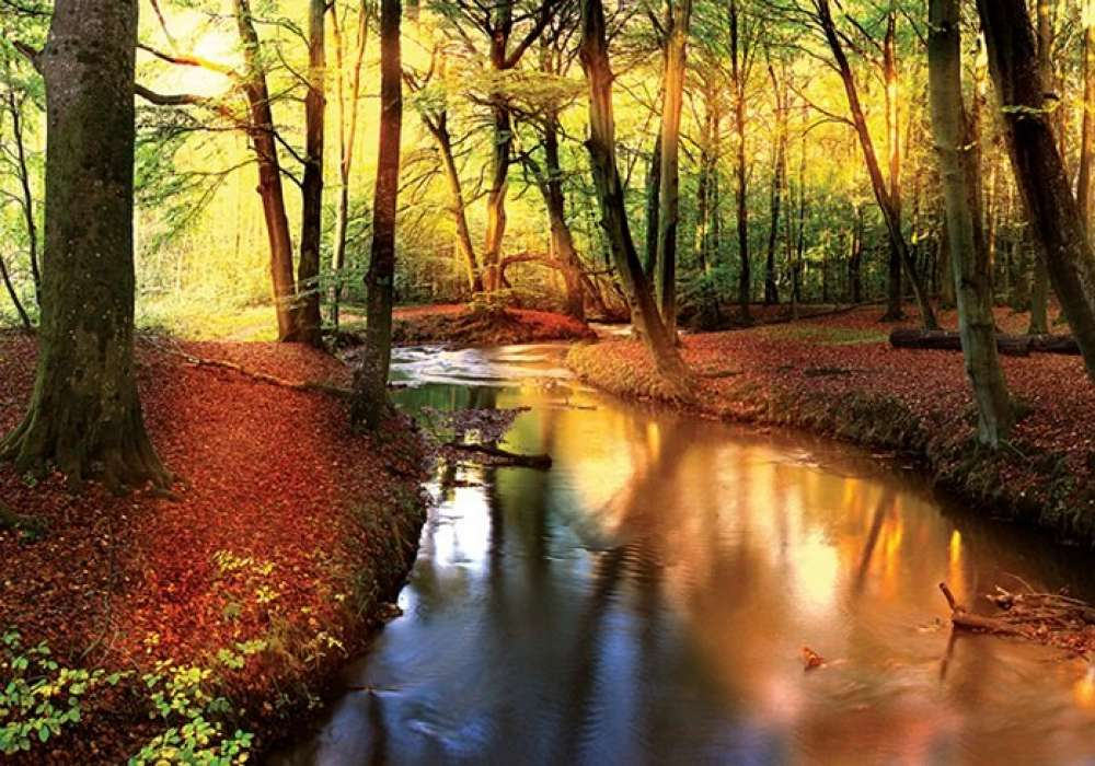 Forest in Autumn - C0464
