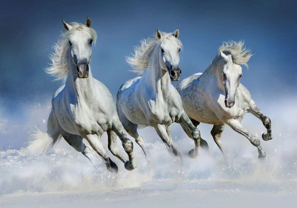 ARABIAN HORSES - 0860