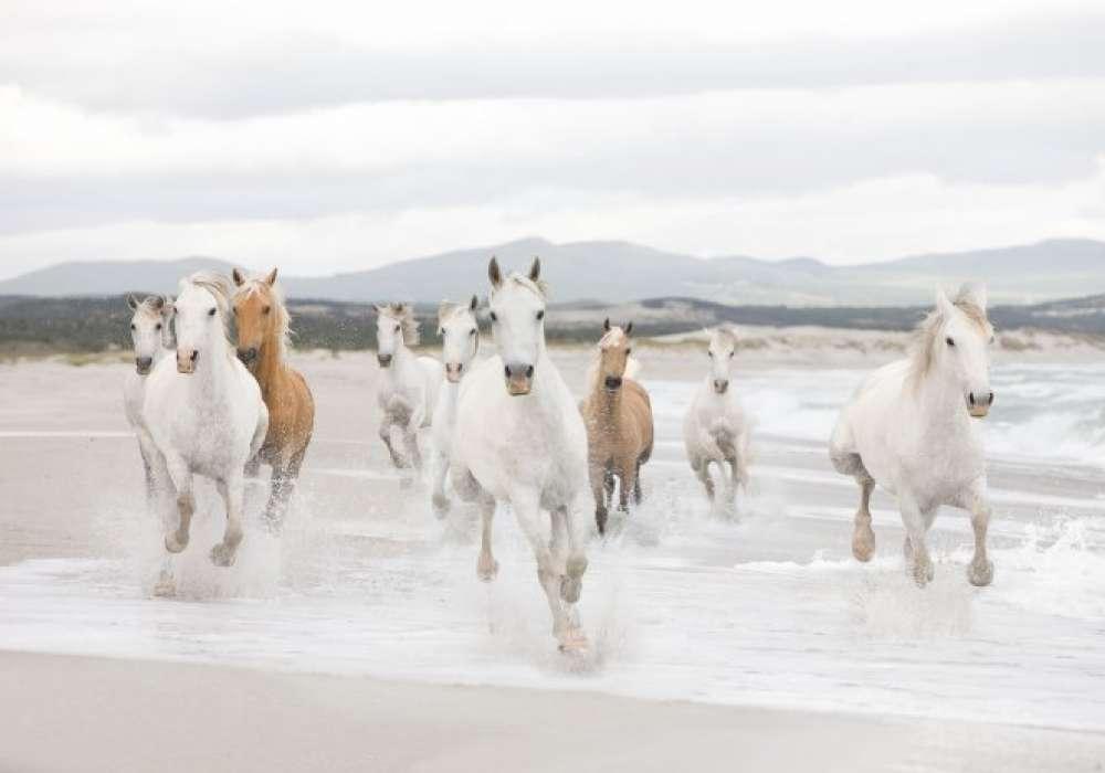 White Horses - K840
