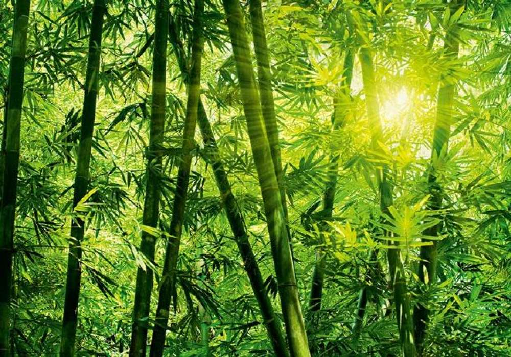 BAMBOO FOREST - 0834